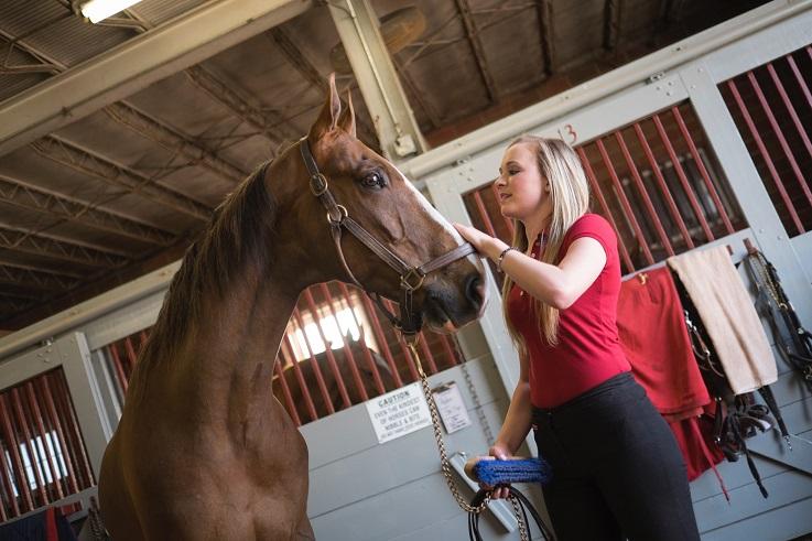 veterinarians treating pregnant mares